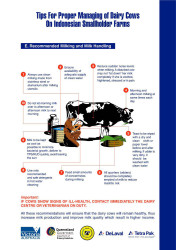 Tips for Proper Managing of Dairy Cows on Indonesian Smallholder Farms (E)